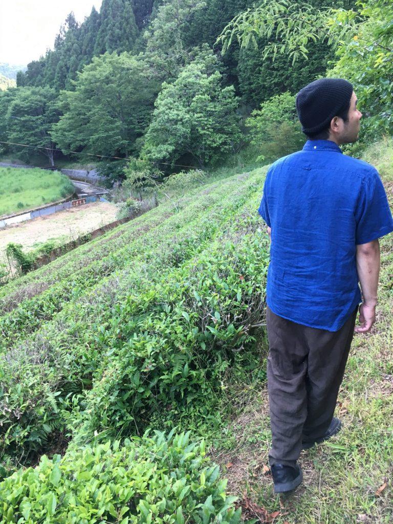 茶畑が広がっています。