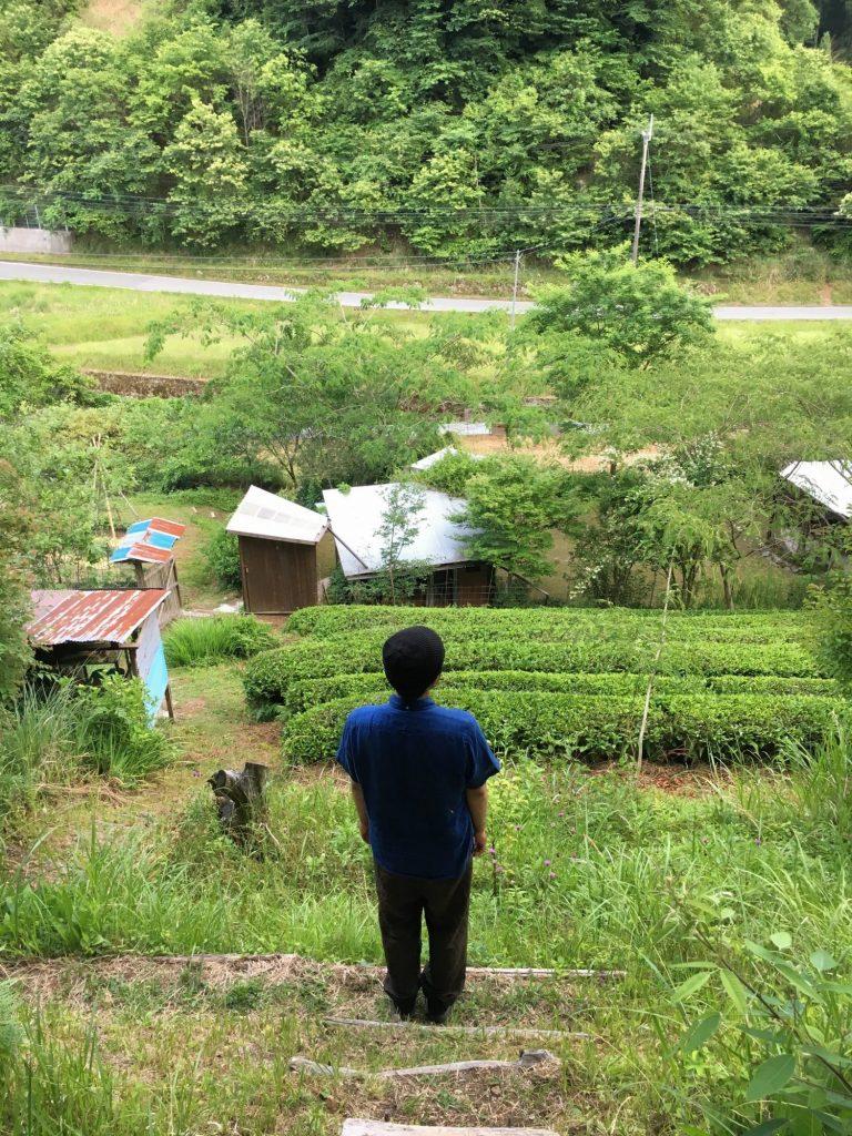 茶畑を見下ろす