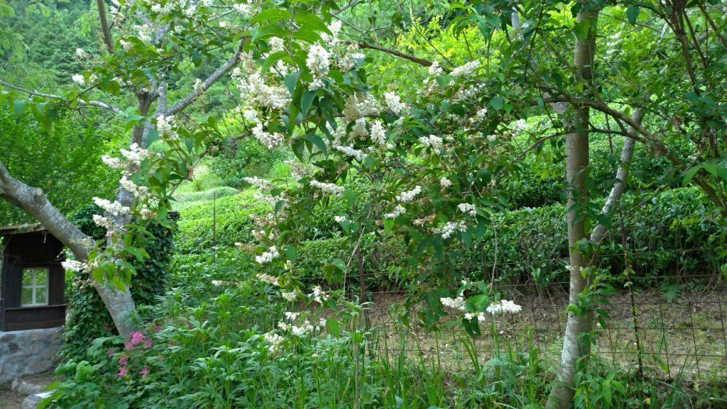 Yomomacha Gardenを望む