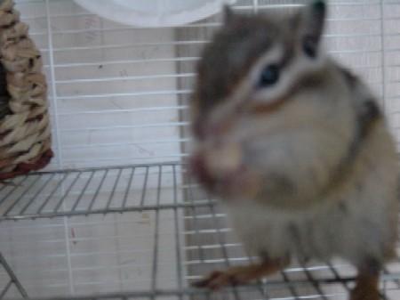 『リスは何食ってんだ?』に続く第2弾、リスは何でも食うんだ!!
