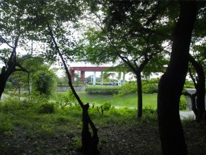 服部緑地の森