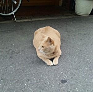 近所のネコと自宅のワンコ